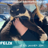 Felix, Chat à adopter