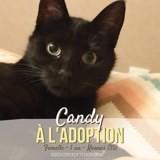 Candy, Chat européen à adopter