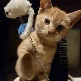 Rambo, Chaton à adopter