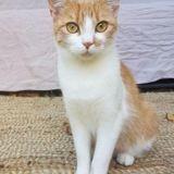 Sylva, Chat à adopter