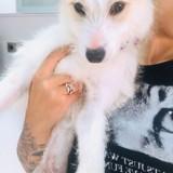 Paco (101 huellas), Chiot à adopter