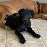 Leo, Chiot à adopter
