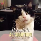 Theophile, Chat à adopter