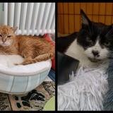 Kenzo et yuki, Chat à adopter