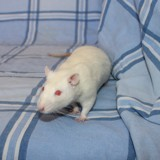 Tipex, Animal à adopter