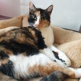Cacahuète, Chat européen à adopter