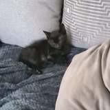 Shadow, Chaton à adopter