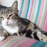 Erwin, Chat européen à adopter