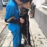 Cora, Chien à adopter