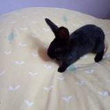 Lapin, Animal à adopter