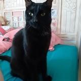 Kirua, Chat à adopter