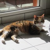 Nollie, Chat à adopter