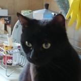 Owen, Chaton à adopter