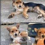 Nino, Chiot à adopter