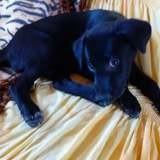 Kaya, Chiot à adopter