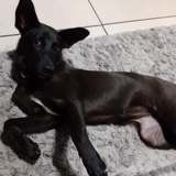 Kerby, Chiot à adopter