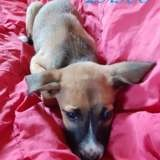 Lasco, Chiot à adopter