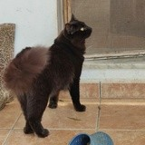 Daisy, Chat à adopter