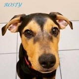 Rosty, Chiot à adopter