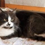Gaïa, Chat à adopter