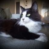 Tam, Chat à adopter