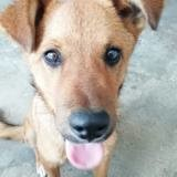 Mahot, Chiot à adopter
