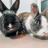 Bernard & bianca, Animal à adopter
