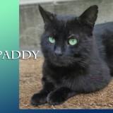 Paddy le super matou, Chat à adopter