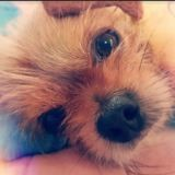 Leon, Chien à adopter