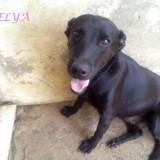 Delya, Chien à adopter
