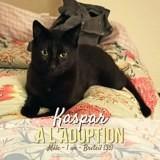 Kaspar, Chat à adopter