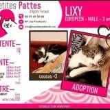Lixy, Chat à adopter