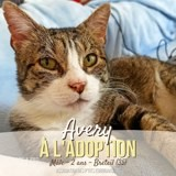 Avery, Chat à adopter