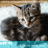 Softi, Chaton à adopter