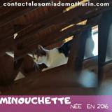Minouchette, Chat à adopter