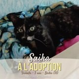 Suika, Chat à adopter