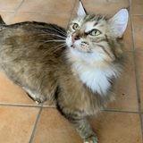 Lavande, Chat à adopter
