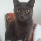 Beaute, Chat à adopter