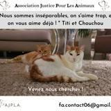 Chouchou, Chat à adopter