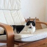 Nadal, Chat à adopter