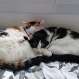 Ganja et meiko, Chat à adopter