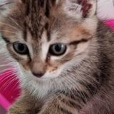 Siky, Chaton à adopter
