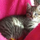 Skippy, Chaton à adopter