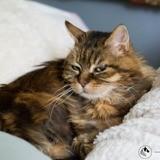 Cleopatre, Chat gouttière à adopter