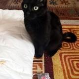 Osiris, Chat à adopter