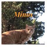 Minos, Chat européen à adopter