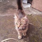 Minicat, Chaton à adopter