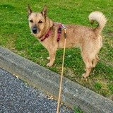 Loona, Chien à adopter