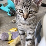 Daisy, Chaton à adopter