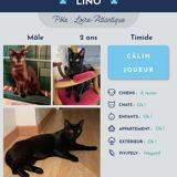 Lino, Chat à adopter